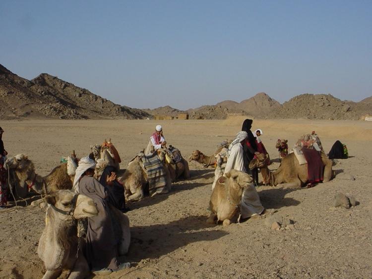 Экскурсия Сахара - парк